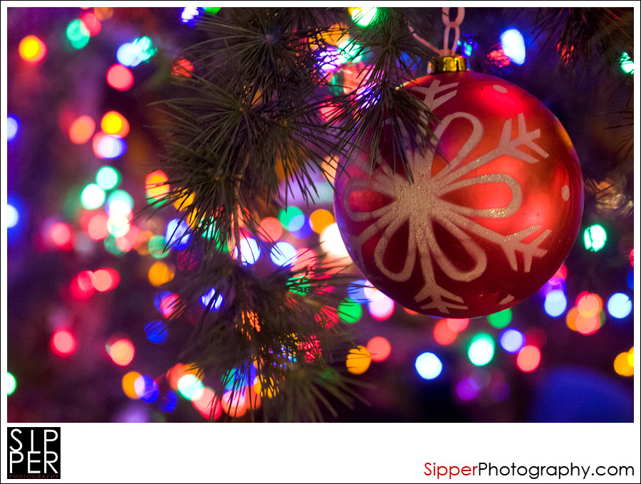 , Happy Holidays from Sipper Photography, Sipper Photography