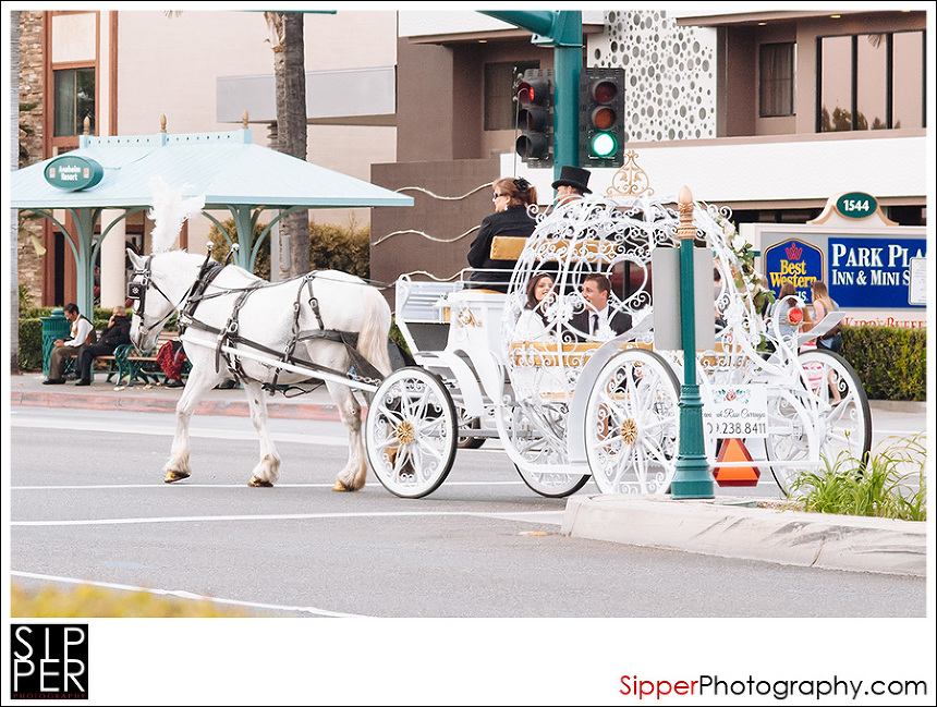 savannah_rose_carriages