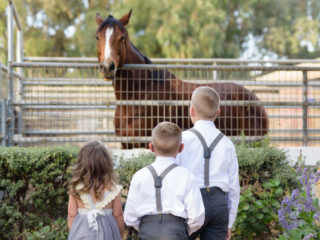 Children looking at the brown horse at The Red Horse Barn Wedding Venue